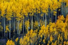 Fall Color Lift