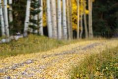 Fall's Confetti