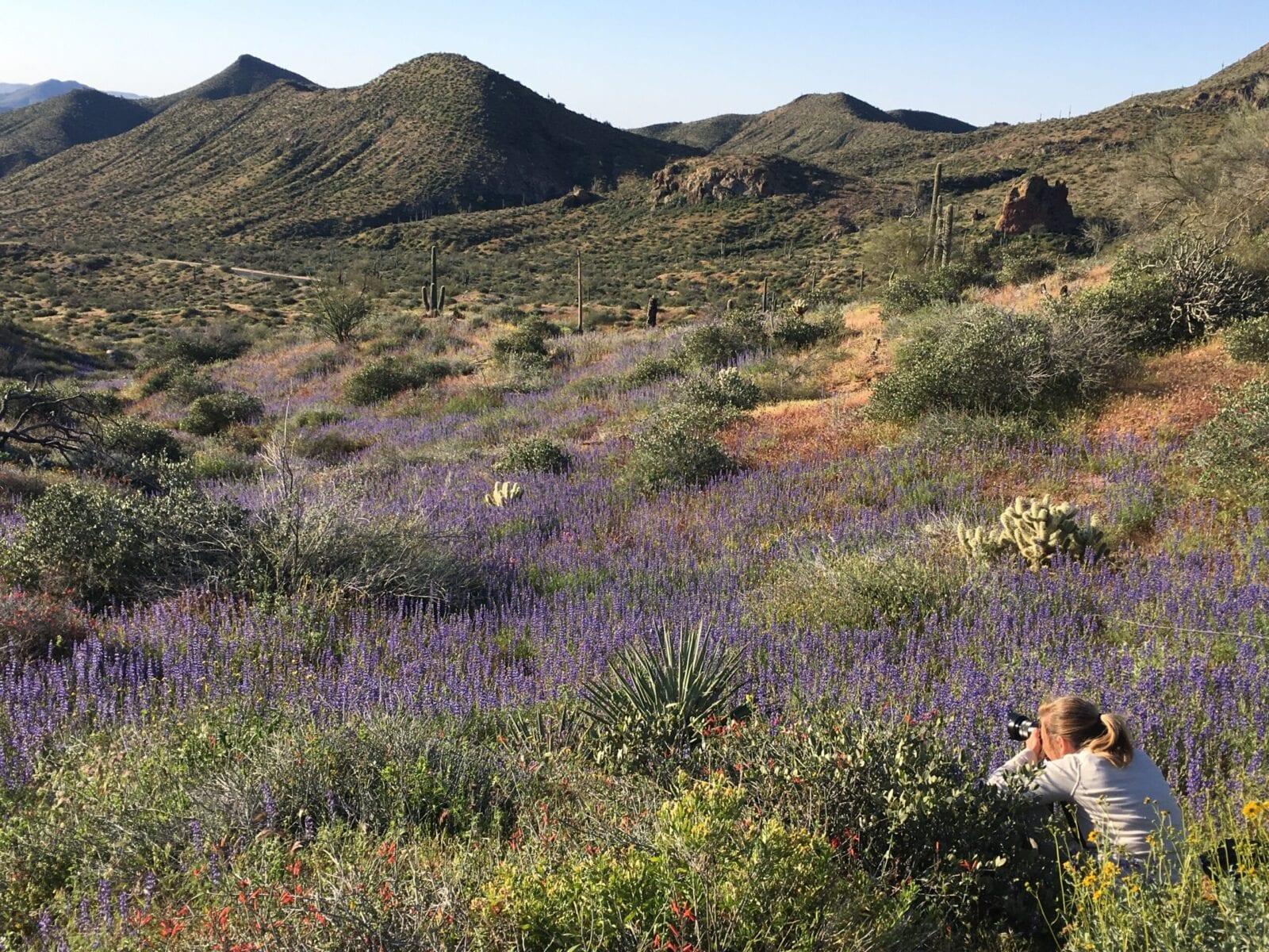 Desert spring bloom