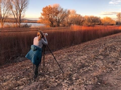 Bosque del Apache sunrise tips the reeds with a red tint.