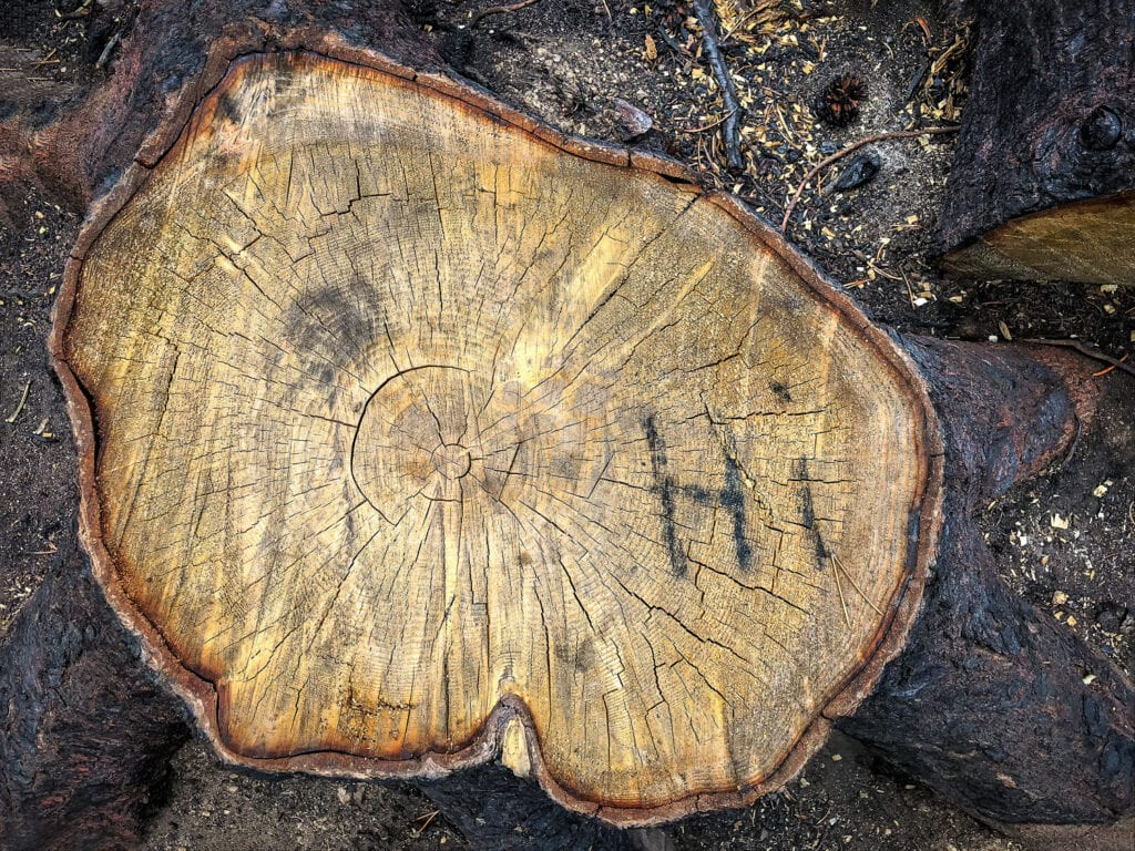"A message of ""hi"" on a stump left after a forest fire in Colorado."