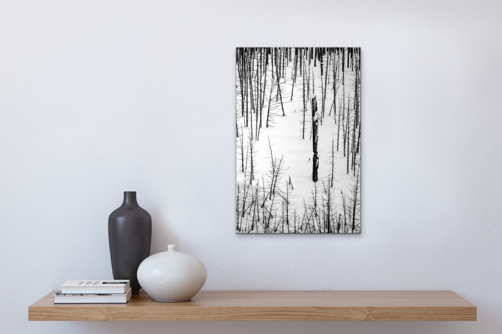 Black and white nature photo of a snow covered mountain side with torched trees from a recent forest fire. One tree surrounded by smaller trees representing individuality.
