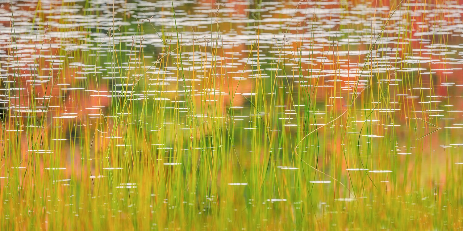 Autumn colors and reeds in water
