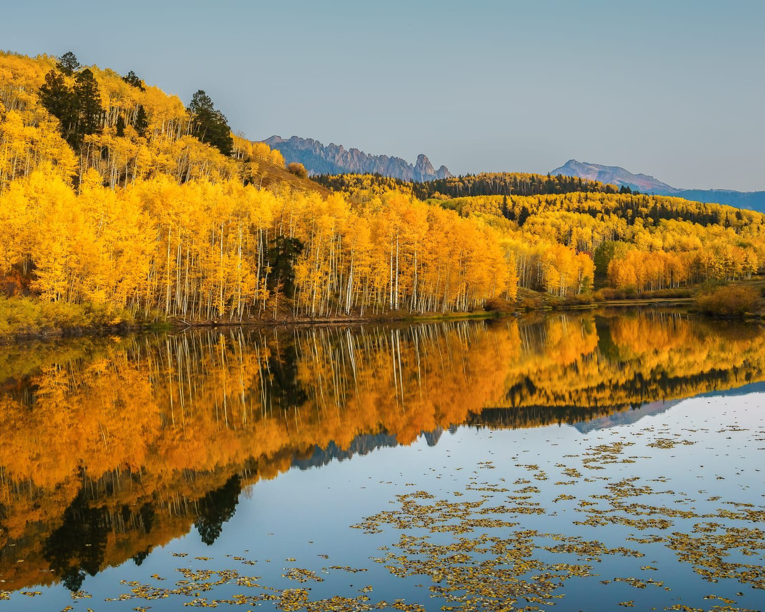 Reflection of yellow aspens in Cushman Lake.
