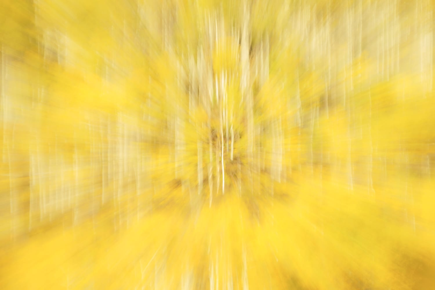 Blurred yellow aspens