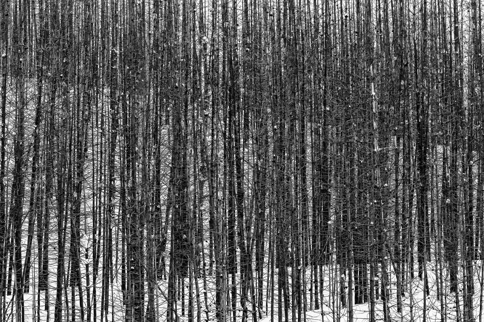 Burned trees on snow-covered hills.