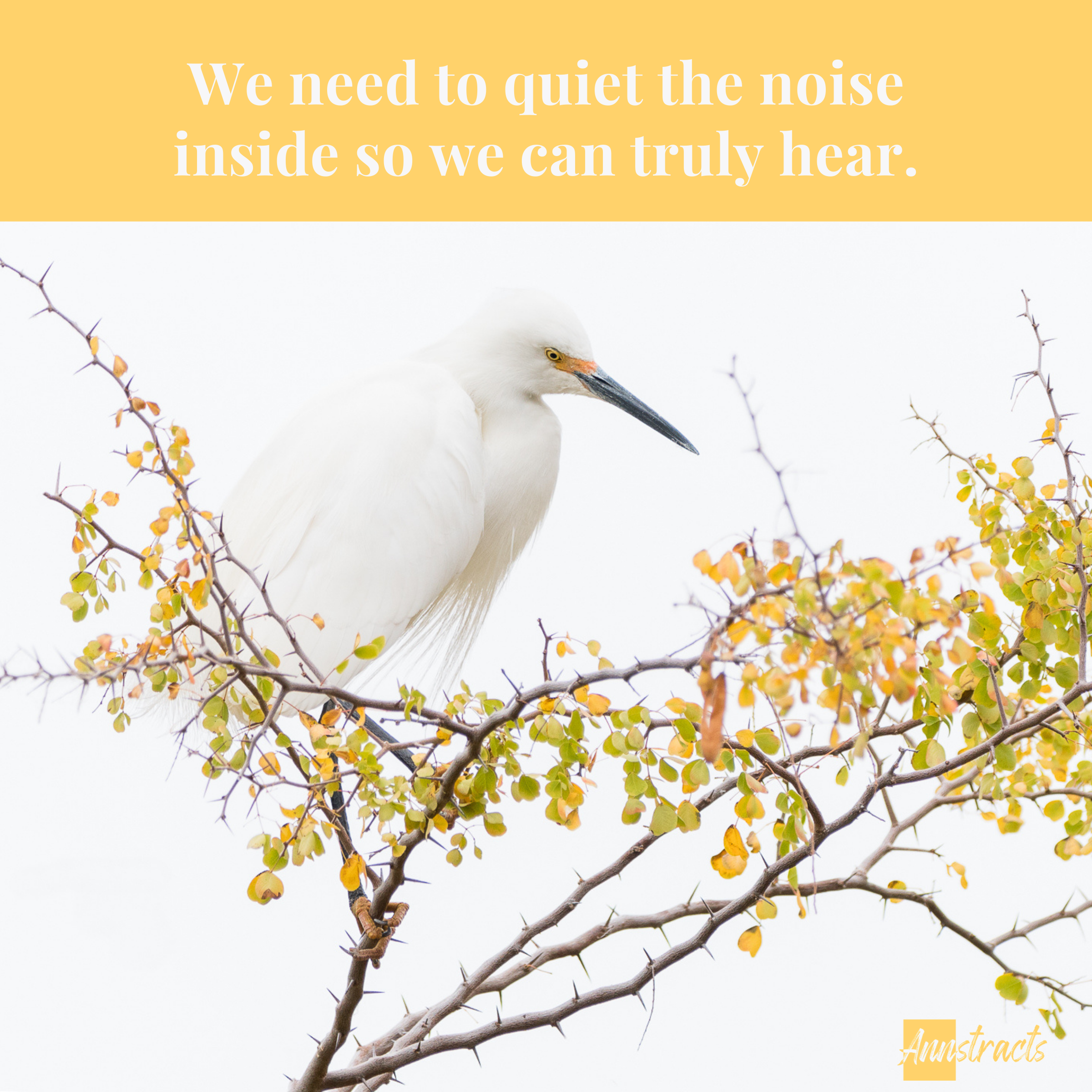 An egret sits in a tree quietly and a quote expresses the need to have a quiet mind.